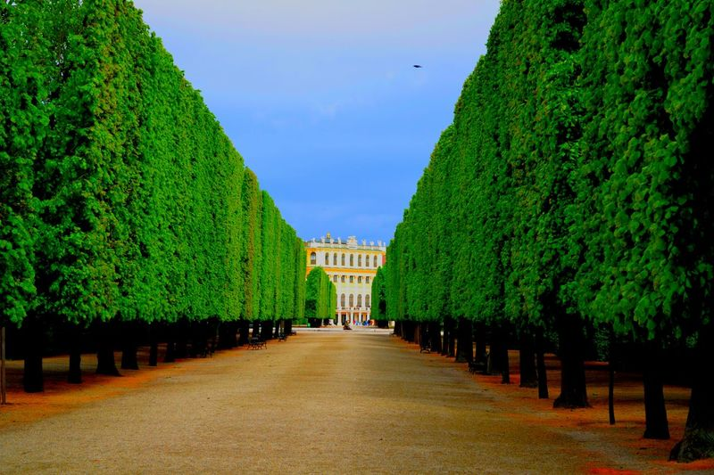 Hedge Hedges Palace Garden Palace Hedge Row Nature Way Of Life Way Colors Green Color City Street Building Colorful Evening Walk Bleu Sky View Light And Shadow Old Building  Building And Sky Sissi Old Buildings Garden Garden Photography Garden Architecture Garden_world