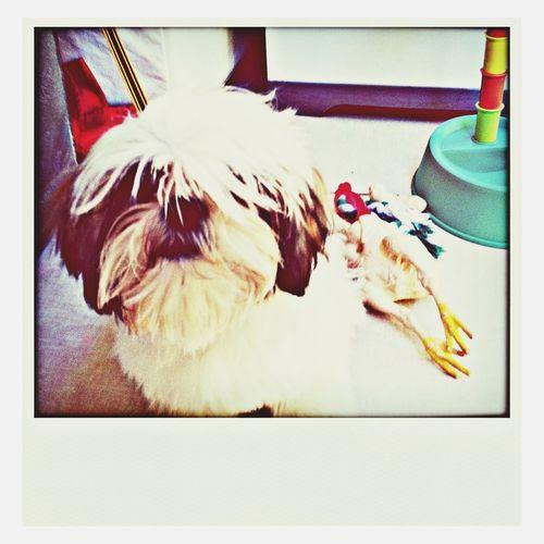 My dog. !!!!!_