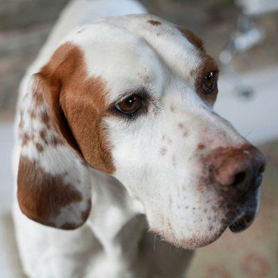 Portrait of a dog / Dog Love Dog Hunting Dog Portrait Of A Dog EyeEm Best Shots EyeEm Best Edits EyeEm Gallery Doggy Love Animal Baubau