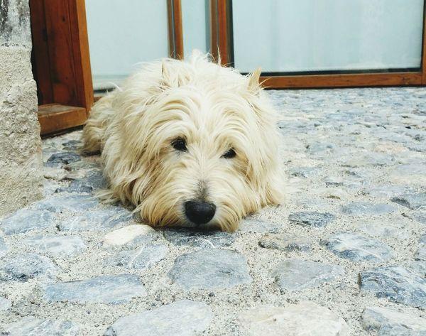Lo unico que inspira es amor Love Dog Love