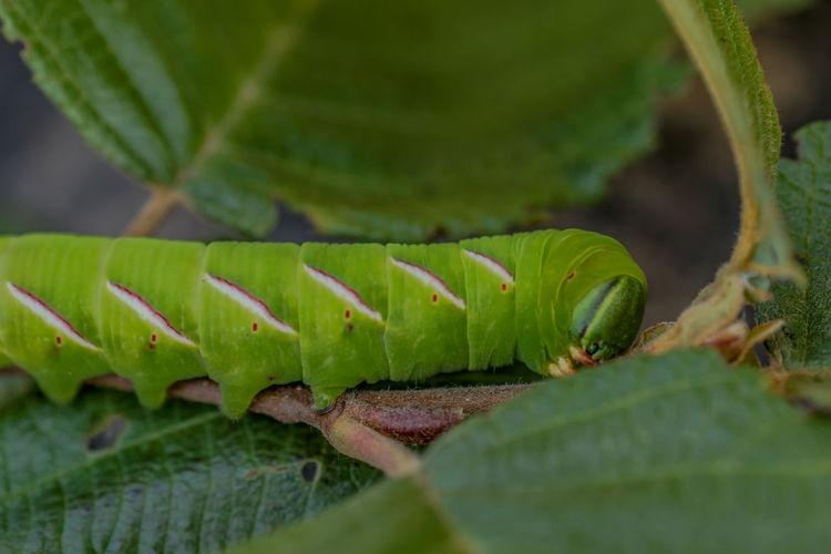 Close-up of caterpillar on leaf