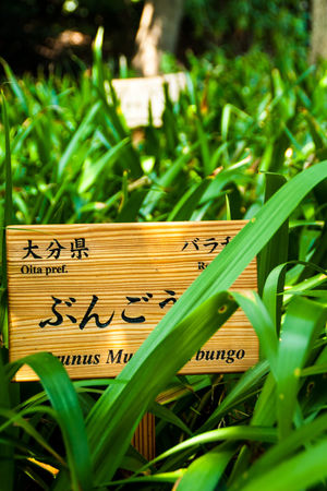 Day Detail Focus On Foreground Garden Grass No People Plant Selective Focus Sign Wood - Material