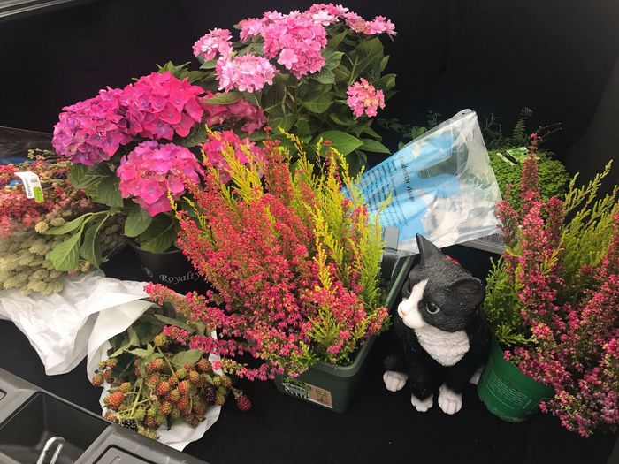 Flower High Angle View Bouquet No People Plant Growth Nature Indoors  Fragility Freshness Day Flower Head Close-up Tesla 愛アムステルダム 花に囲まれる幸せ 阿姆斯特丹 I'm Happy