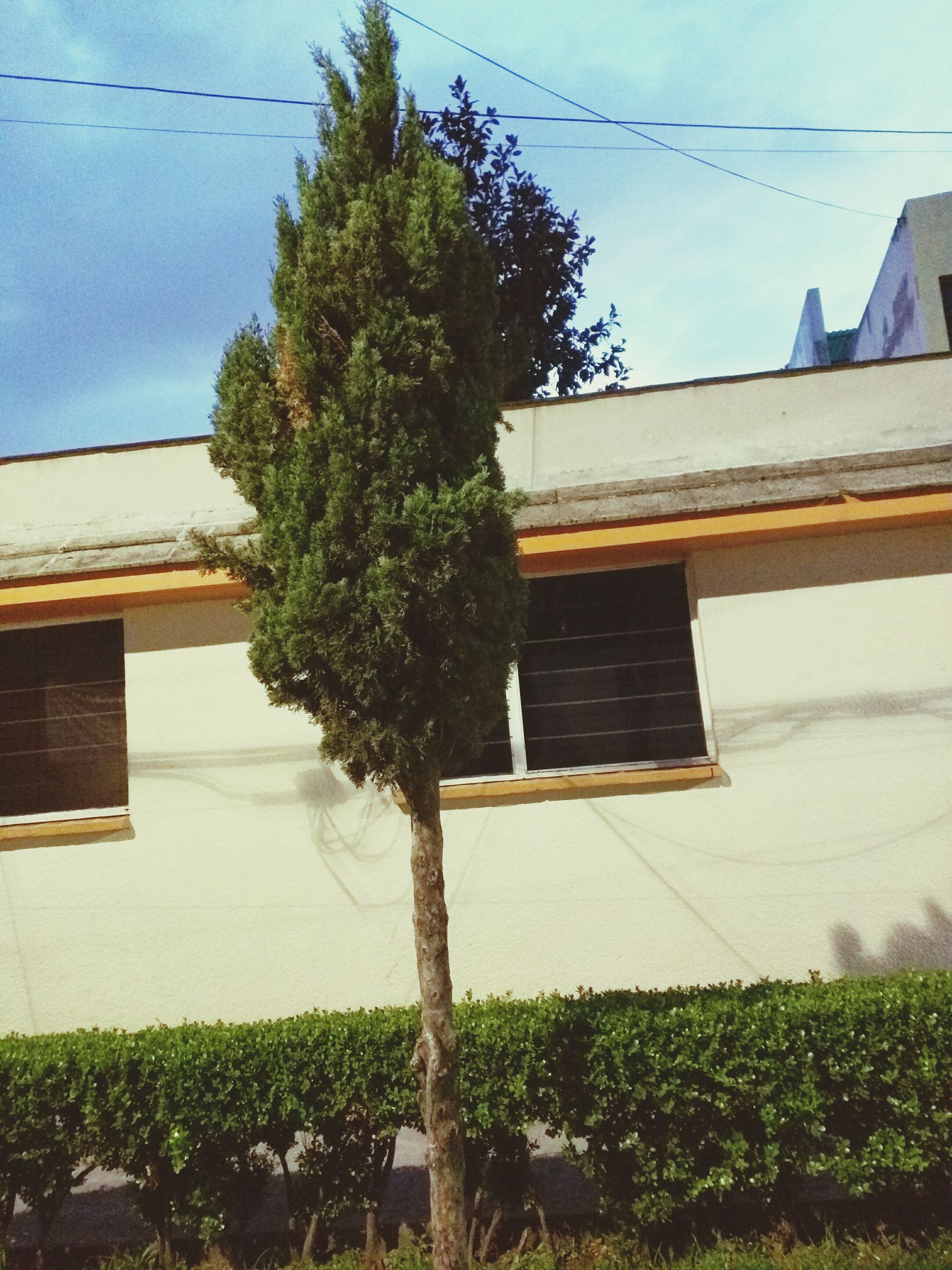 building exterior, built structure, architecture, house, tree, sky, growth, plant, residential structure, blue, grass, power line, sunlight, green color, day, no people, residential building, outdoors, nature, shadow