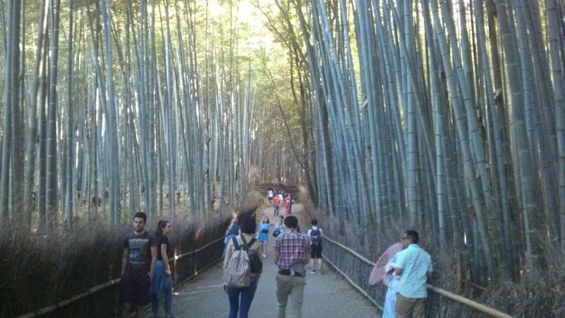 Outdoors Tree Forest People Bamboo Grove Togetherness Nature Water Adult Real People Day Asian Culture Nature Seascape Cloud - Sky Sky Discover  ASIA Japanese Culture Beauty In Nature Travel Photography Travel Destinations City Beatiful Japanese