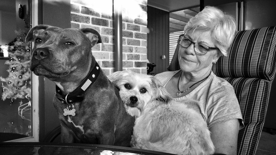 Mum and the dogs. Women Who Inspire You Blackandwhite Black & White Black And White Animals Dog Dogslife Pet Photography  Cute Pets Mum MyMum Staffy Staffordshire Bull Terrier Staffylove Bluestaffy Englishstaffordshirebullterrier