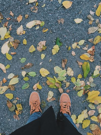 Low section of person standing on road by fallen leaves during autumn