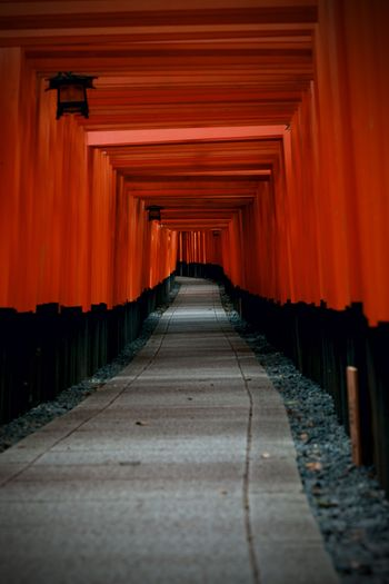 Torii Gate Leading Toward Fushimi Inari Shrine