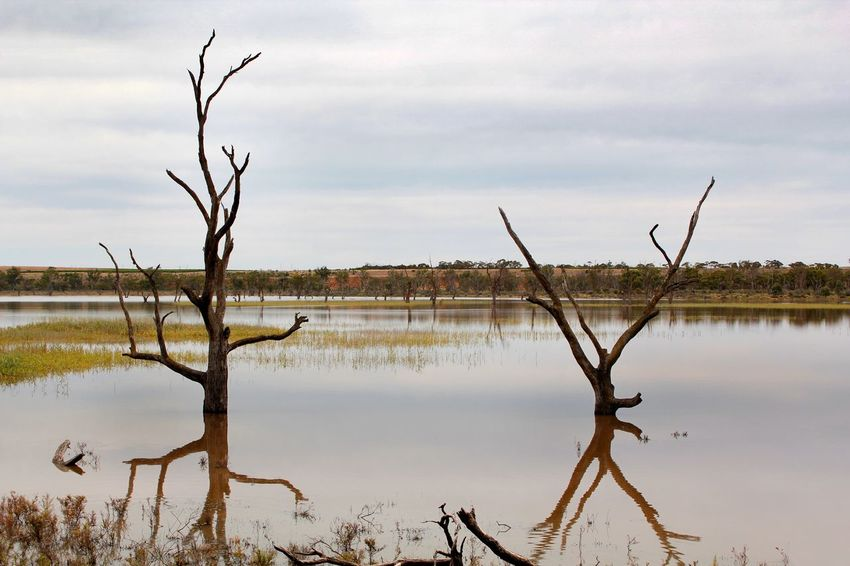 Dead trees in the floodwaters of the river Murray in South Australia Australian Landscape Calm Bare Tree Beauty In Nature Branch Day Dead Plant Dead Tree Floodwaters Lake Nature No People Outdoors Reflection Reflections In The Water River Murray Scenics Sky Tranquil Scene Tranquility Tree Water