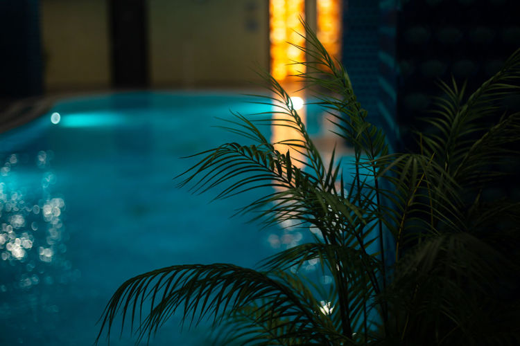 Close-up of palm tree by swimming pool