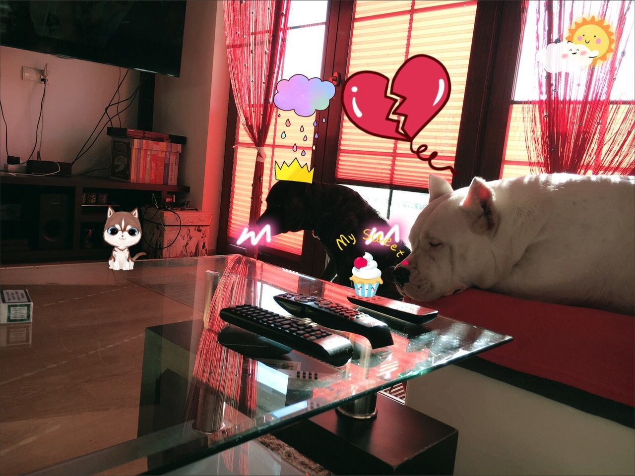 real people, indoors, home interior, one person, mammal, pets, animal themes, one animal, domestic animals, lifestyles, domestic cat, day, young adult, keyboard