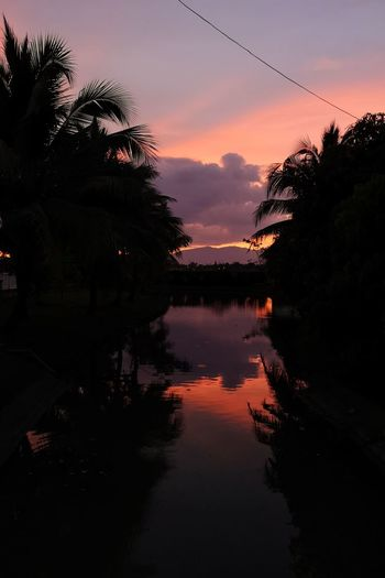 Silhouette trees by swimming pool against romantic sky at sunset