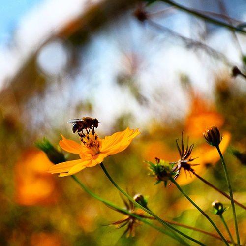 花 蜂 虫 風景 自然