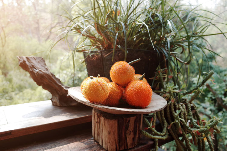 Citrus Fruit Close-up Day Focus On Foreground Food Food And Drink Freshness Fruit Growth Healthy Eating Nature No People Orange Orange - Fruit Orange Color Outdoors Plant Ripe Tree Wellbeing Wood - Material