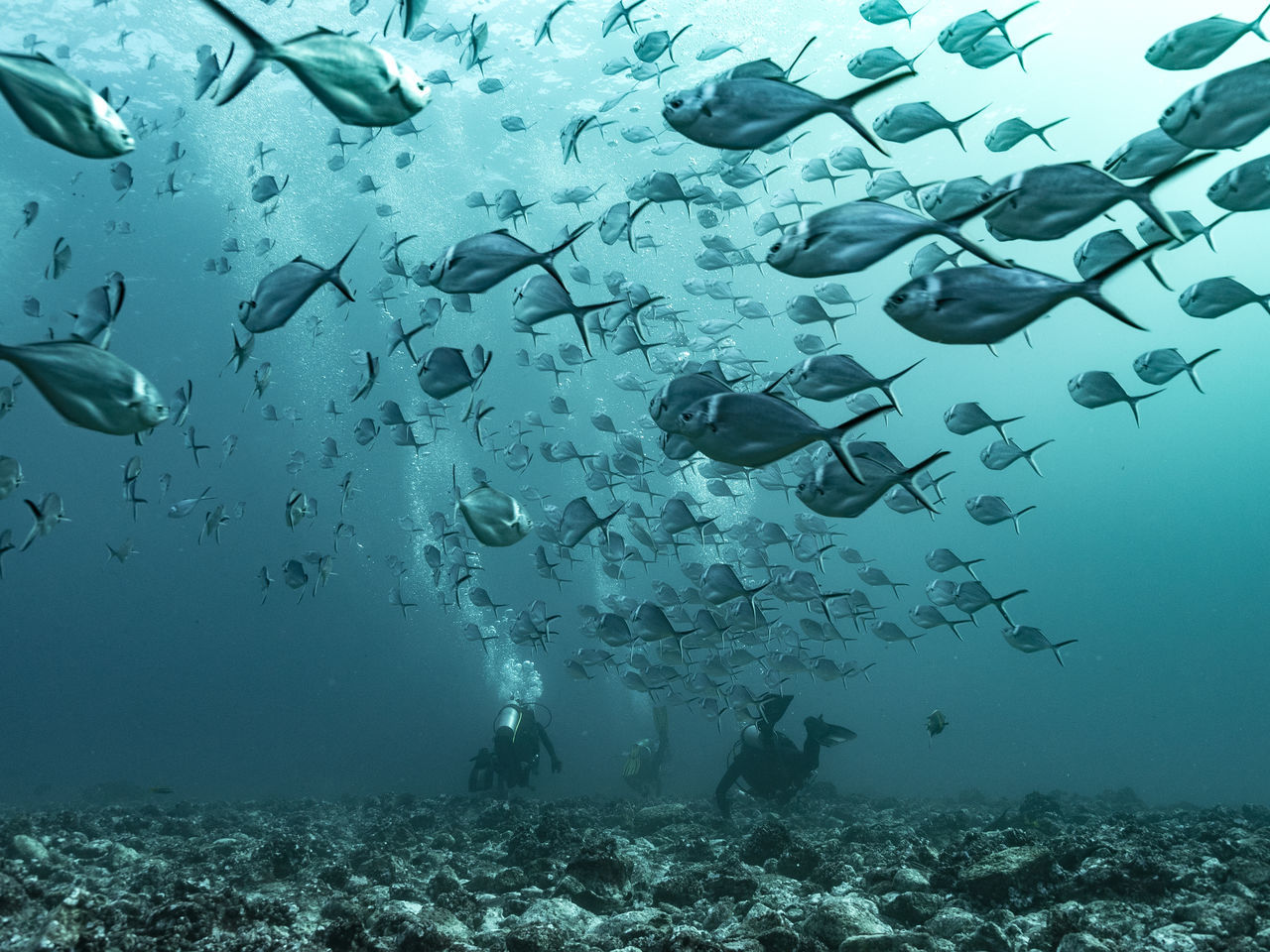 People scuba diving by school of fish in sea