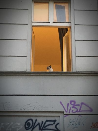 I'm lookin' out of the Window. Empires rise and fall. Cat Looking Out Of The Window White Wall Light Window Cat Architecture Built Structure Animal Themes Building Exterior Text Day Animal Window Low Angle View No People Graffiti Building One Animal