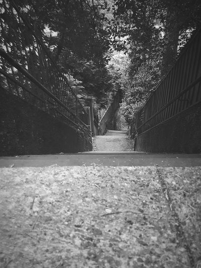 The first step is always one of the most important. Just like motivation to accomplish your goal(s). EyeEmNewHere S7 Photography Philosophenweg Stairs Stairway No People Nature Day Outdoors Tree Growth