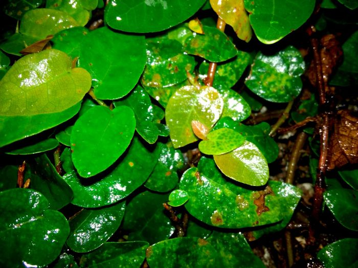 Green Color Full Frame Backgrounds Growth Water Leaf Freshness Floating On Water Nature Close-up Fragility Plant Green Beauty In Nature Branch Botany Day Vibrant Color Outdoors Nature In The Night Huawei Shots Huawei Y5