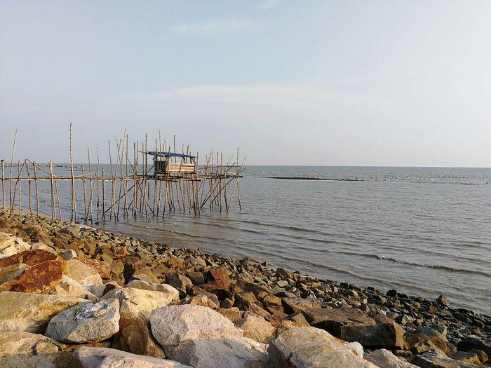 Little hoot by the sea. EyeEm Selects Water Sea Bird Beach Low Tide Sand Pebble Sky Horizon Over Water Landscape