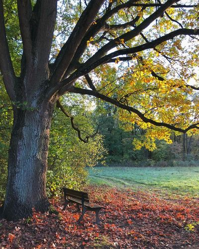 Herbst im Hermann-Löns Park Hannover Herbst Fall Autumn Plant Tree Growth Nature No People Day Land Beauty In Nature Forest Branch Plant Part Green Color Autumn Tree Trunk Tranquility Leaf Tranquil Scene Sunlight Outdoors Trunk