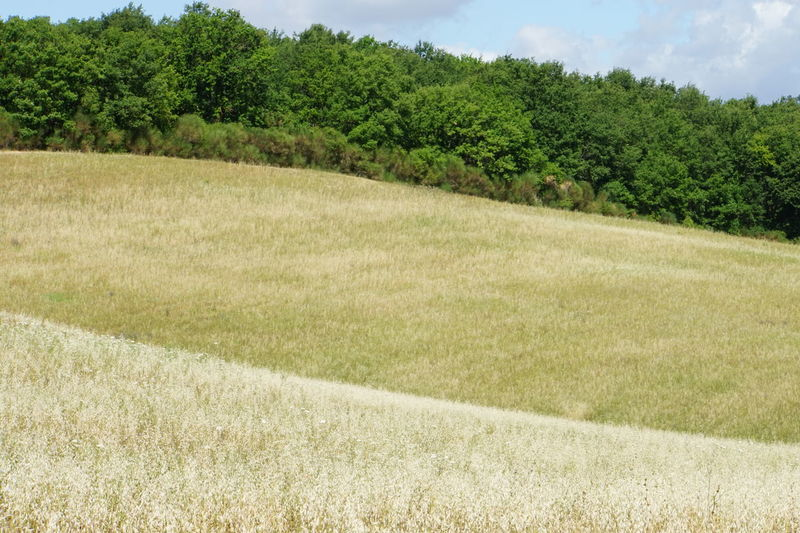 Different Layers Different Shades Of Green Dry Grass Grasses And Trees Horizontal Lines In Nature No Photoshop, No Filter Sony A6000 Toscany Summer Tranquil Scenery Trees In The Background Valdichiana, Toscany