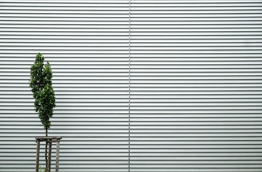 Urbanplantseries Minimalist Minimalist Architecture Architecture Backgrounds Close-up Day Fujix_berlin Fujixseries Minimal Minimalism Minimalist Photography  Minimalistic Minimalobsession Minmalist Nature_collection No People Outdoors Pattern Striped Tree Urban Plant Urbanplantseries The Week On EyeEm Ralfpollack_fotografie The Graphic City