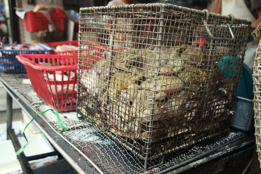 Animal Cage Close-up Delicacy Food For Sale Frog Gourmet Market No People Outdoors Tradition