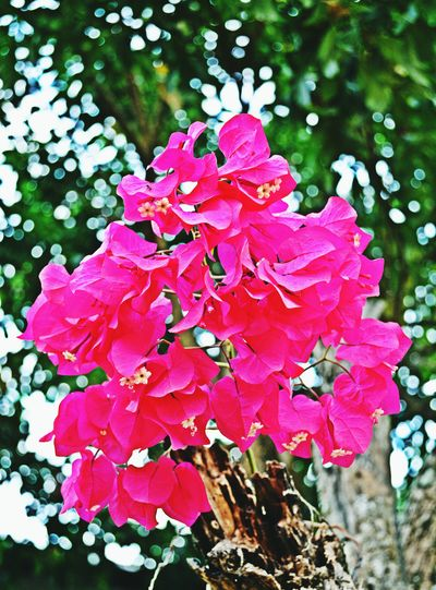 Nature Beauty In Nature Pink Color Flower Outdoors Close-up Flower Head Tree