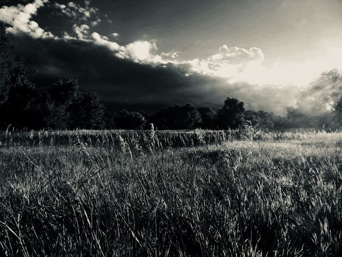 Blacken the sun EyeEmNewHere Field Landscape Nature No People Grass Growth Tree Day Outdoors Sky Tranquility Tranquil Scene Agriculture Beauty In Nature Scenics Cloud - Sky Rural Scene Animal Themes EyeEmNewHere EyeEmNewHere