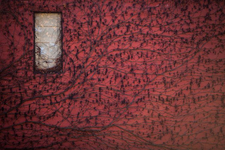 Full frame shot of red wall