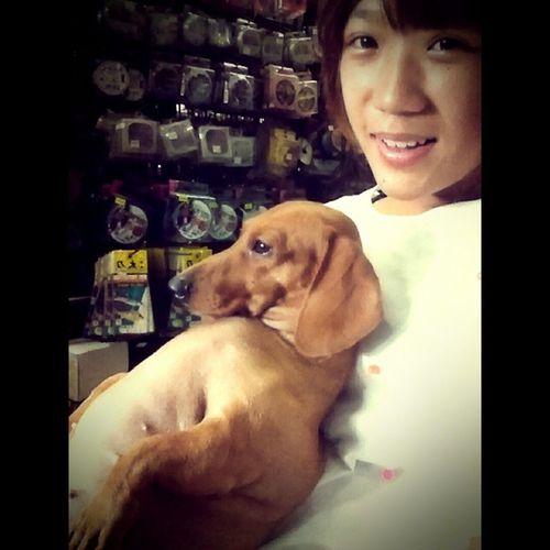 肥婆在看電視 Watch TV Dog 狗 狗兒 狗狗 短足部 dachshund girl taiwan 女孩 love
