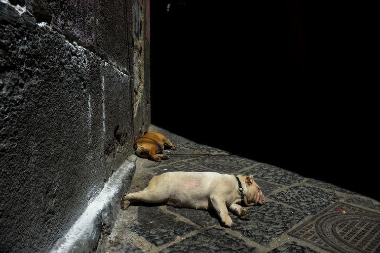 Dog on floor at night