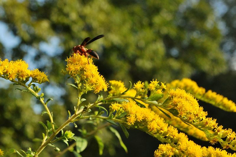Nature Wasp Yellow Leaves Eyeemnaturelover In My Yard Insect Outdoors Eyeem Plants Country Life