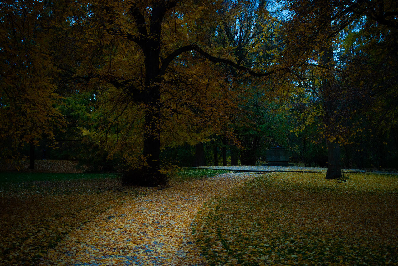 tree, plant, autumn, change, beauty in nature, park, nature, tranquility, growth, tranquil scene, scenics - nature, park - man made space, no people, land, day, plant part, outdoors, forest, leaf, tree trunk, autumn collection, fall