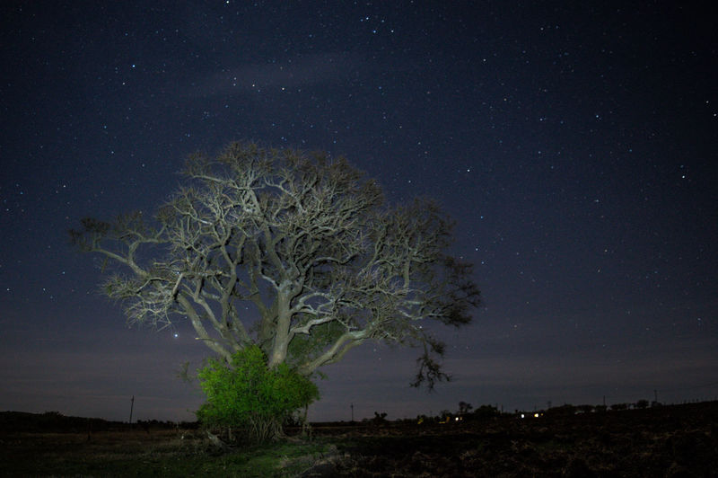 Star - Space Night Tree Single Tree Space And Astronomy Astronomy Tranquility Dramatic Sky Landscape Pinaceae Tree Trunk Moonlight Scenics Sky Moon Tranquil Scene Beauty In Nature Pine Tree No People Milky Way