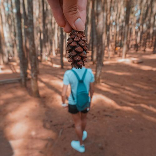 Optical illusion of cropped hand holding pine cone as woman head in forest