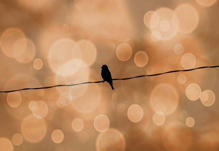 Sparrow sitting on a phone line in Piechowice, Poland | Animals Bokeh Deceptively Simple Getting Creative Mirrorless No People Pastel Piechowice Poland Silhouette Pastel Power
