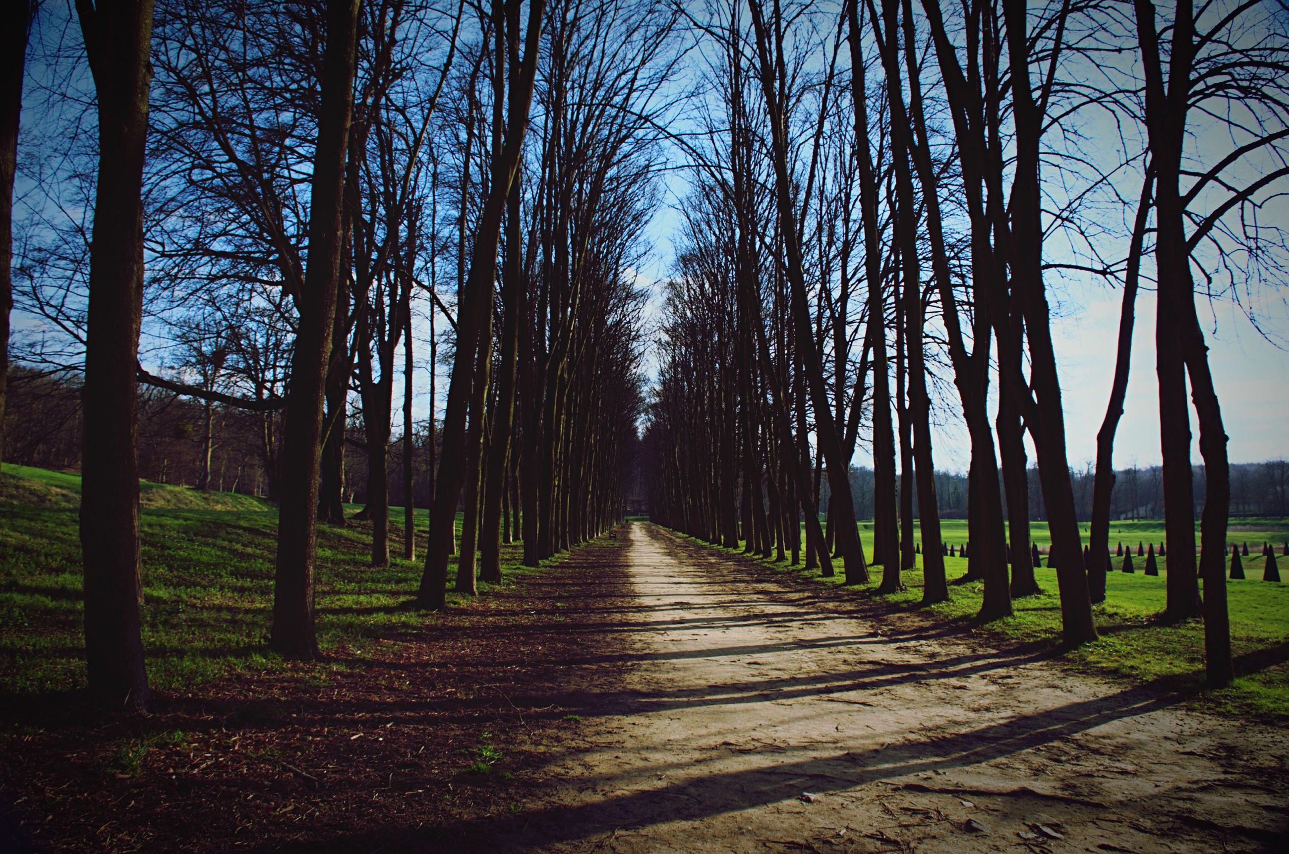the way forward, tree, diminishing perspective, tree trunk, treelined, vanishing point, tranquility, bare tree, tranquil scene, nature, footpath, pathway, branch, scenics, beauty in nature, shadow, sunlight, growth, long, narrow