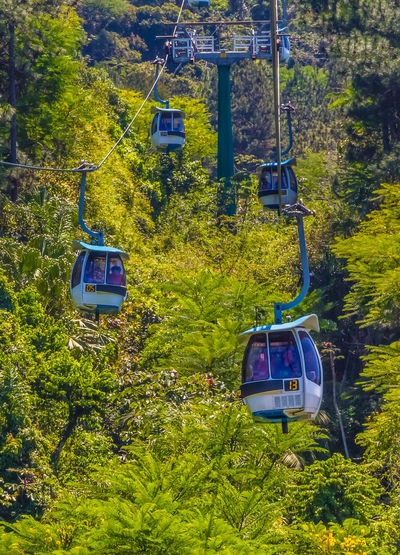 Overhead cable car in forest