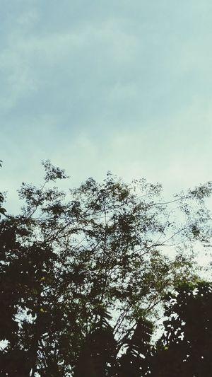 Bird Tree Flying Flock Of Birds Sky