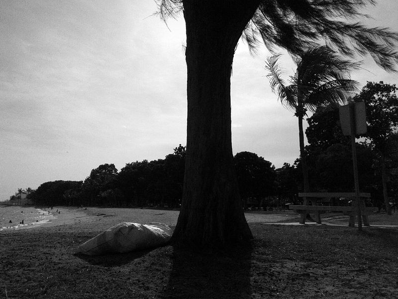 Tree Tranquil Scene Tree Trunk Growth Nature Day Solitude Surface Level Scenics Sky Streetsofsingapore Singaporestreetphotography Singaporeartmuseum Ilovephotography Sand Beach Sea Shore Wave Beauty In Nature Blackandwhite Taking Photos Tree Tranquil Scene Tranquility