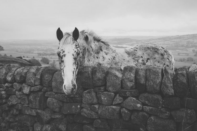 Horse Standing By Stone Wall On Field Against Sky