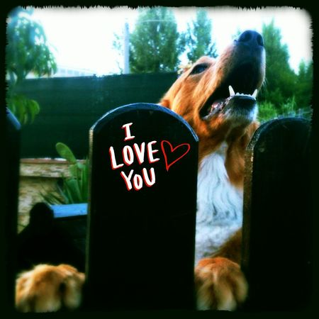 That's Me I Love My Pet I Love My Dog