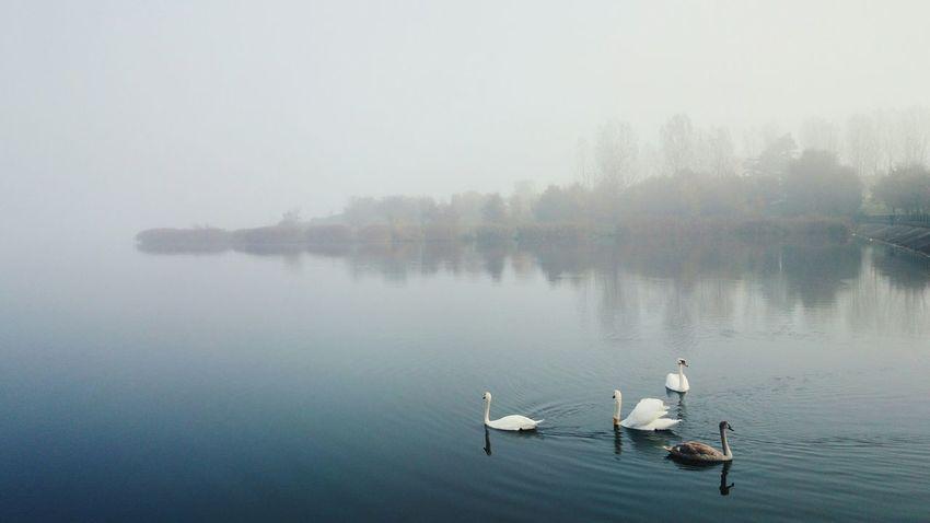 Bugaj Piotrków Autumn Chasing Fog Mistyfoggymilkymoody Vscocam EyeEm Best Shots EyeEm Best Edits Sony XPERIA Better Look Twice