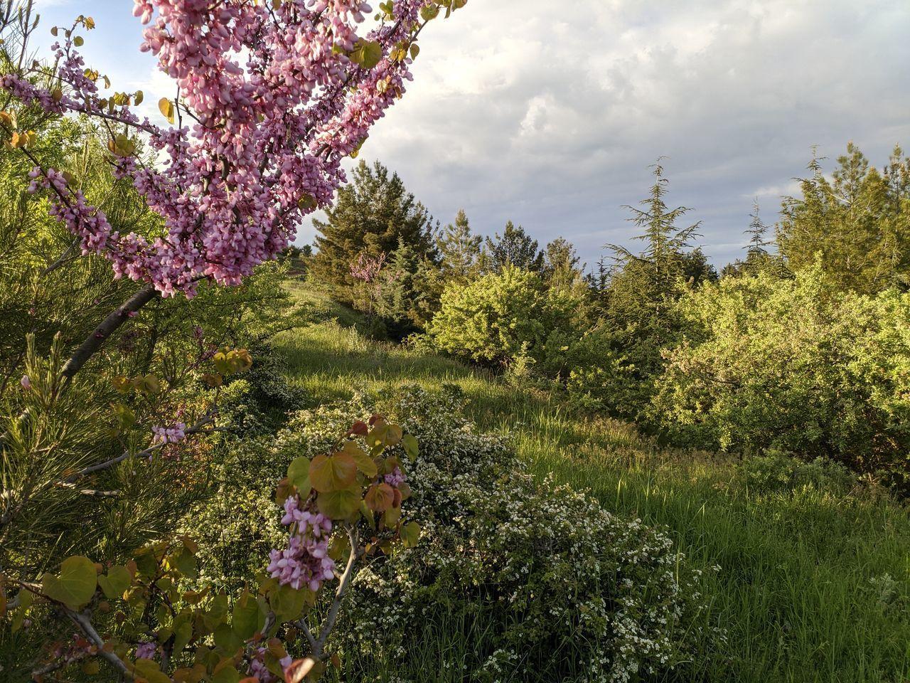 PINK FLOWERING PLANT AGAINST TREES