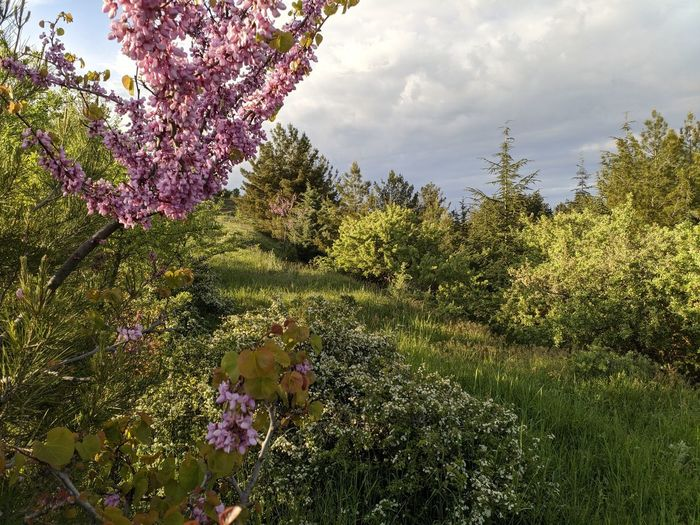 Pink flowering plants and trees against sky