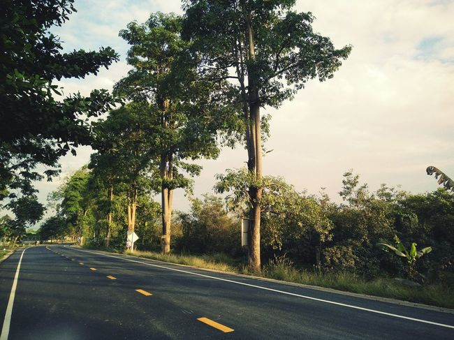 A long a road Tree Road The Way Forward Day Outdoors Nature No People Beauty In Nature Travel
