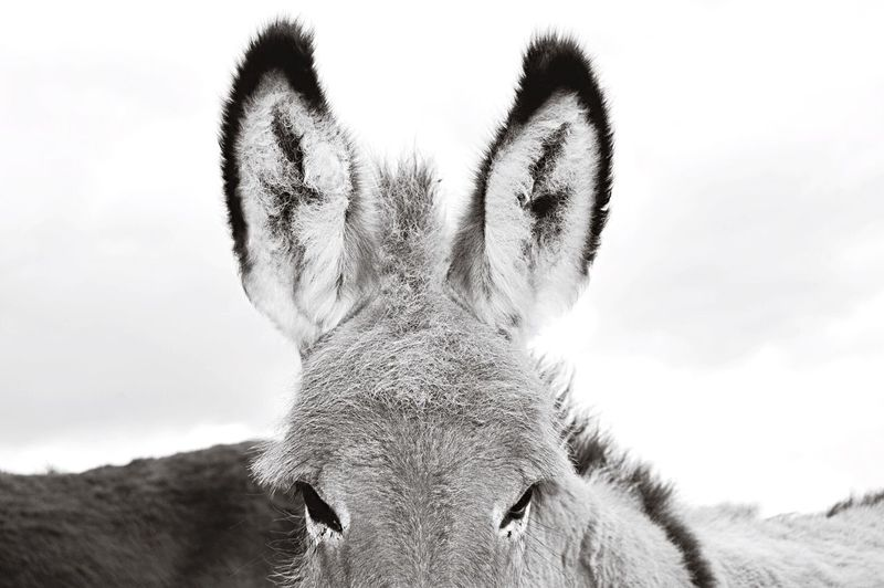 Donkey. Taking Photos Hanging Out EyeEm Best Shots Eye4photography  Nikon Blackandwhite Black & White Black And White Animals Shades Of Grey