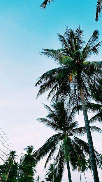 Ko Samui, Thailand VSCO Vscotravel Thailand Kosamui Explore Travelgram Traveller Travel Wanderlust Photography