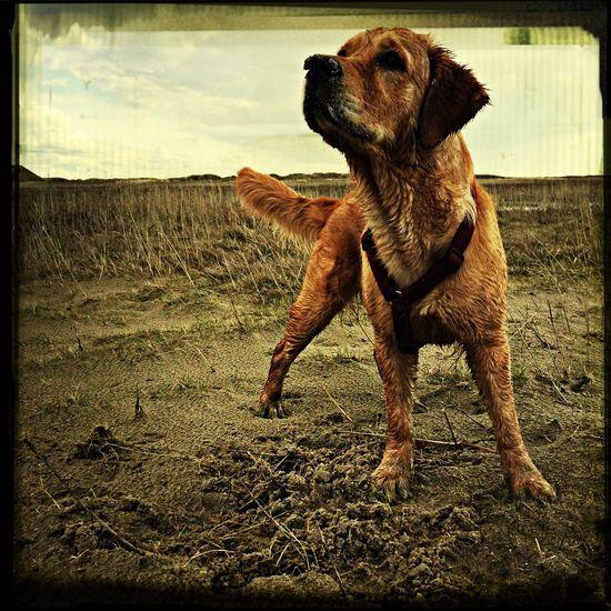Greta Dogs Dog